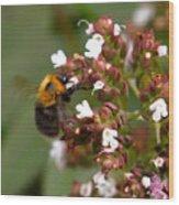 Cuckoo Bumblebee Wood Print