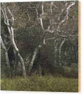 Dv Creek Trees Wood Print