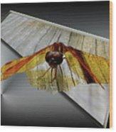 Eastern Amber Dragonfly 3d Wood Print