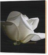 Evening Light White Rose Flower Wood Print