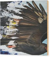 Everglades Snail Kite Wood Print