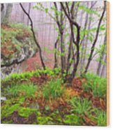 Foggy Spring Morning Wood Print