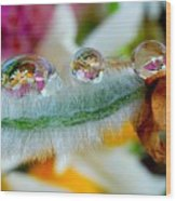 Friendly Company Of Rain Droplets On A Flower Cereal Wood Print