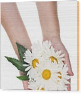 Giant Daisies For The Cosmetic  Industry Wood Print