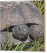 Gopher Tortoise Close Up Wood Print