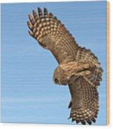Great Gray Owl Plumage Patterns In-flight Wood Print