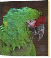 Great Green Macaw Ara Ambiguus Wood Print
