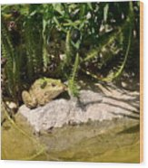 Green Frog Sitting At The Pond Wood Print