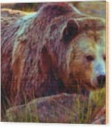 Grizzly Bear In Rocks Wood Print