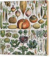Illustration Of Vegetable Varieties Wood Print