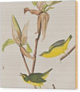 Kentucky Warbler Wood Print
