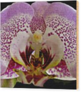 Kiss Of Orchid  Wood Print