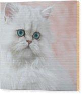 Kitten On Pink Wood Print