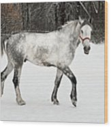 Light  Grey Horse Goes On A Winter Glade  Wood Print