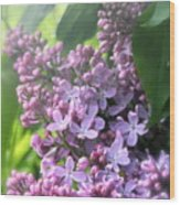 Lilacs On A Misty Morning Wood Print