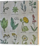 Lithography Of Common Flowers Wood Print