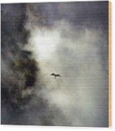 Magnificent Frigatebird Wood Print
