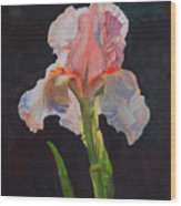 Majestic Iris Wood Print