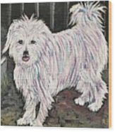 Maltese Terrier Mix In Living Color Wood Print