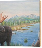 Moose At Baxter State Park Wood Print