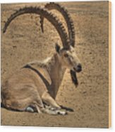 Nubian Ibex Wood Print