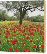 Olive Amongst Poppies Wood Print