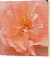 Peachy Perfection Wood Print