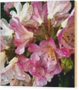 Rhododendron In Pink  Wood Print