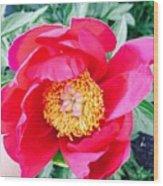 Scott' Flower2 Wood Print