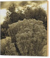 Shrub In Santa Fe Wood Print