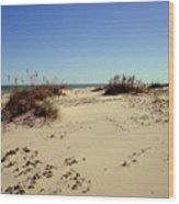 South Padre Island Dunes Wood Print