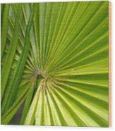 Spiny Fiber Palm Wood Print
