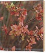 Spirea 1280 Wood Print