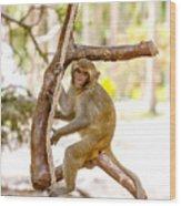 Swinging Monkey Wood Print