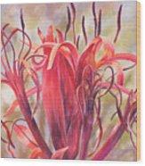 Tendrils Gymea Lily   Wood Print