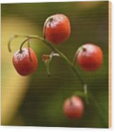 The Berries Of The Lily Of The Valley Wood Print