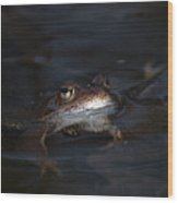 The Common Frog 1 Wood Print