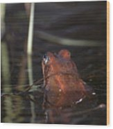 The Common Frog 2 Wood Print