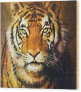 Tiger Head, Color Oil Painting On Canvas. Wood Print