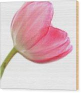 Tulip Acropolis Wood Print