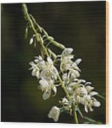 White Fireweed Wood Print
