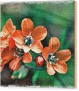 Wildflowers 5 -  Polemonium Reptans  - Digital Paint 3 Wood Print