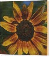 Yellow Sun Flower Wood Print