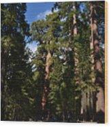 Yosemite Sequia Wood Print