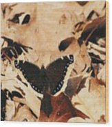 #002 Nymphalis Antiopa, Mourning Cloak Camberwell Beauty Large Butterfly Anglewing Wood Print