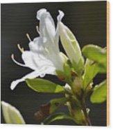 0032  Blossoming Wood Print