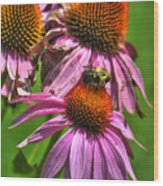 01 Bee And Echinacea Wood Print