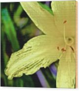 01142017078 Wood Print