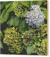 01142017082 Wood Print