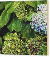 01142017083 Wood Print